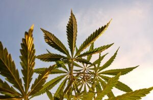 The FDA And Hemp CBD: Can't We All Just Get Along? (Part I)