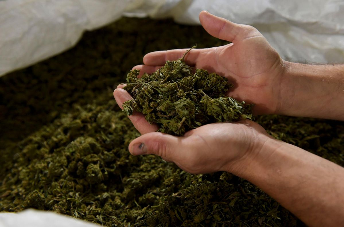 'Precipitous' Decrease In Hemp And Marijuana M&A Continuing In The Middle Of COVID-19 Pandemic