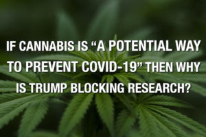 "If Cannabis Is ""A Potential Way To Prevent COVID-19"" Then Why Is Trump Blocking Research?"