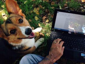 An author composed a stunning homage to his late canine disguised as composing suggestions