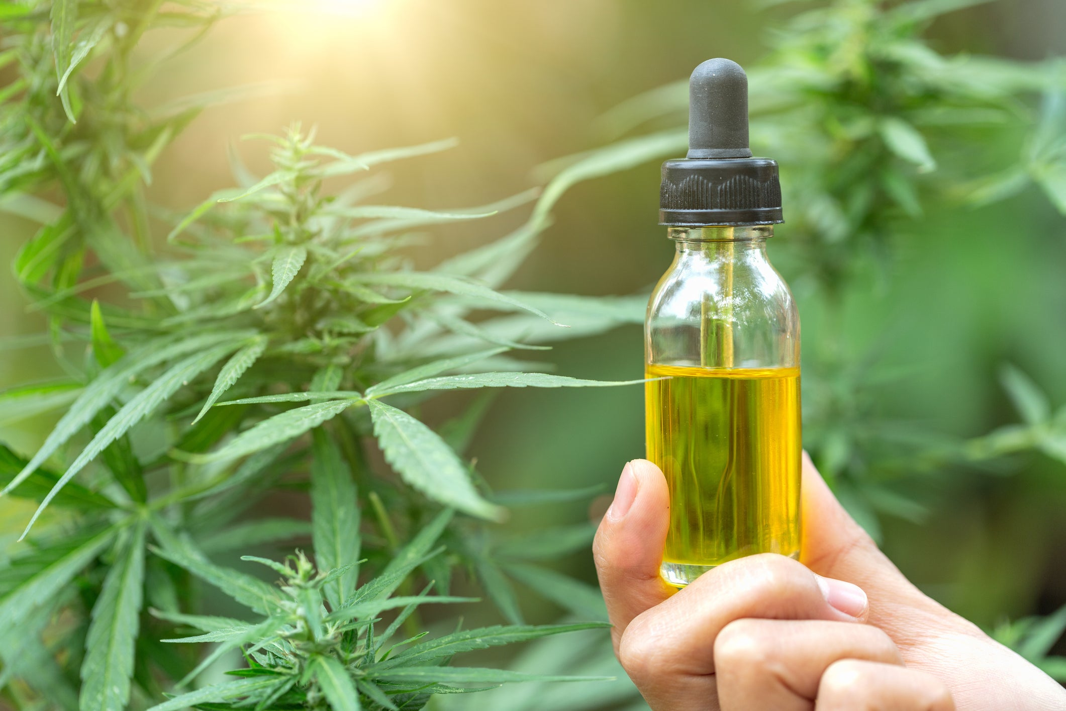 Face the Truths: The CBD Hype Train Has Hindered